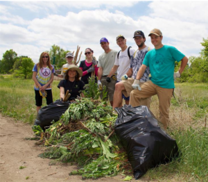Invasive species removal along Lower Bear Creek. Photo: Groundwork Denver