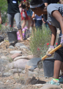 Youth help establish Monarch habitat. Photo: University of Arizona Project WET